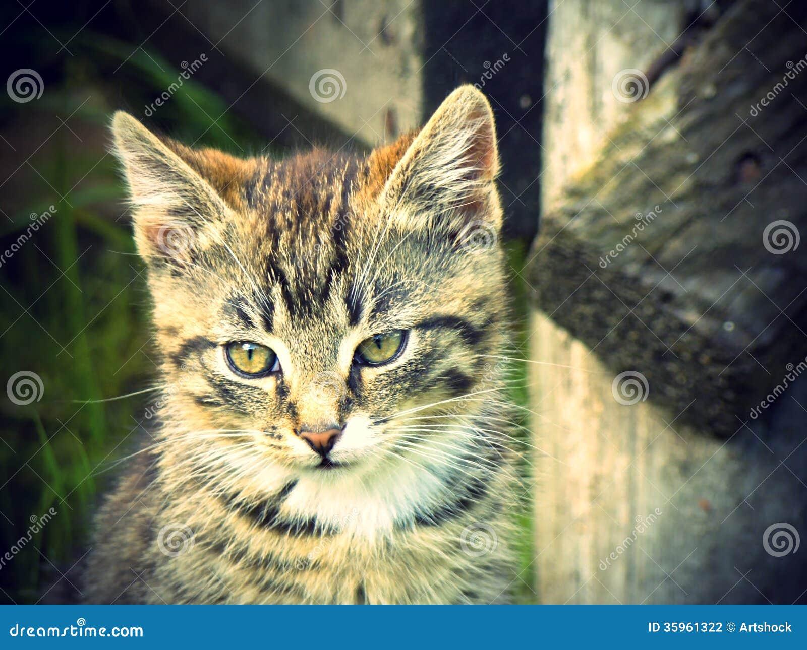Gato retro del retrato