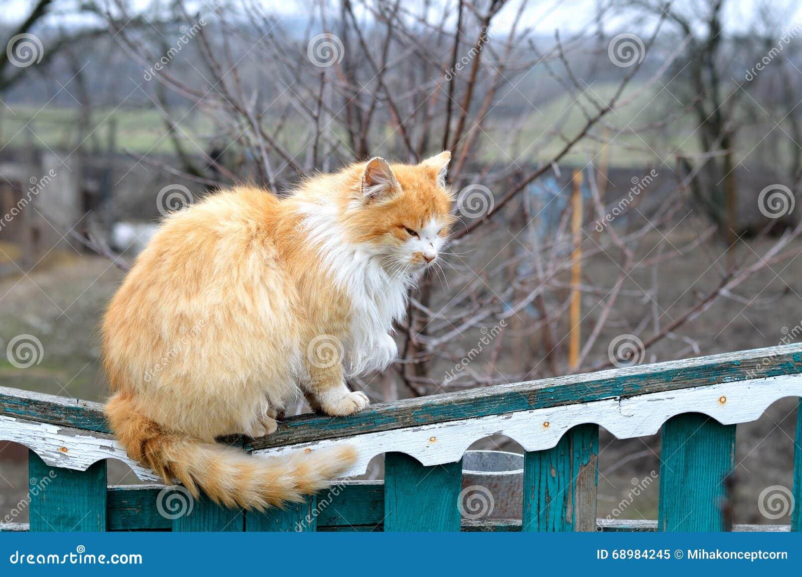 Gato rojo que se sienta en la cerca