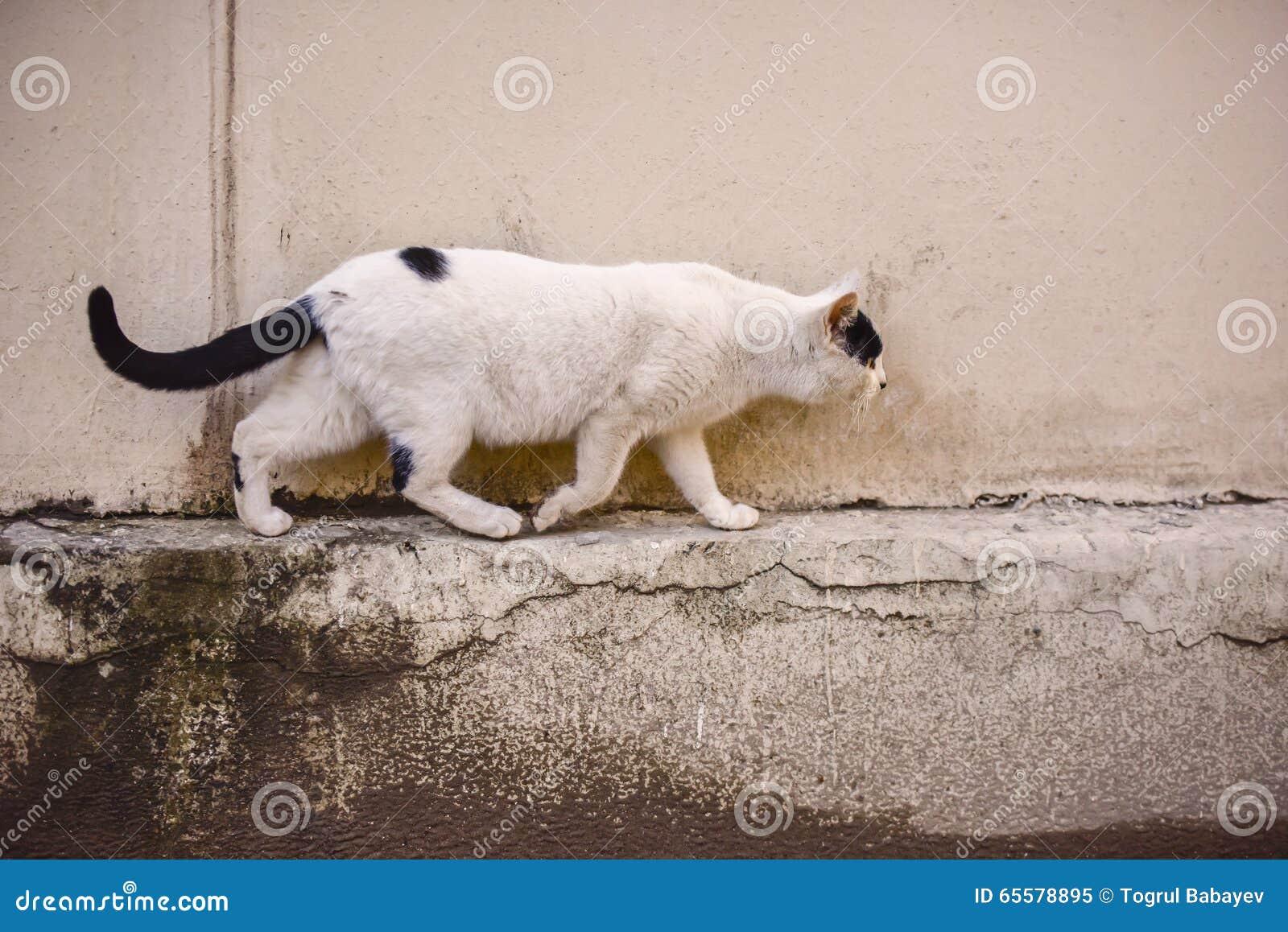 Gato running na rua
