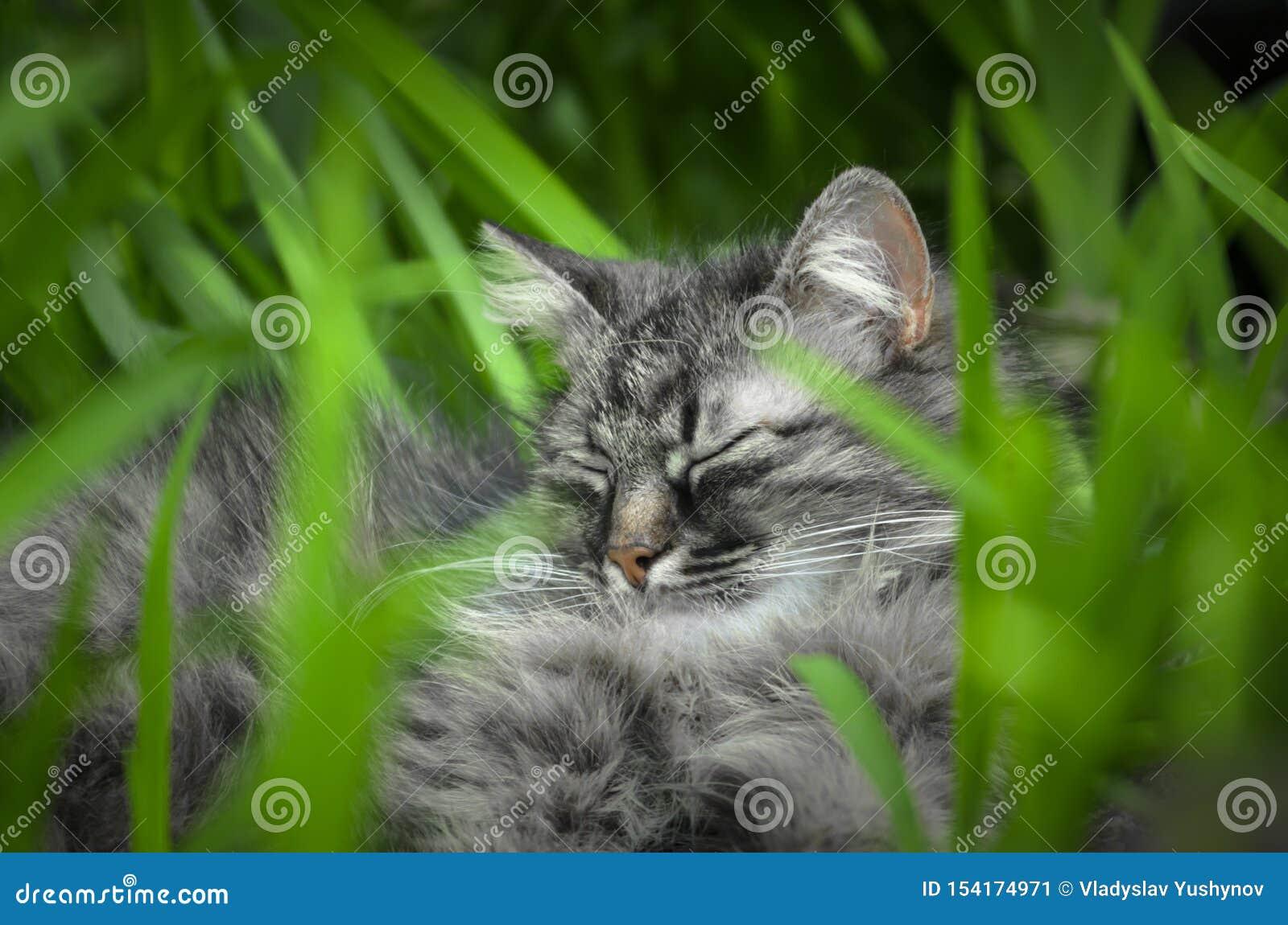 Gato selvagem que encontra-se entre o verde com olhos verdes
