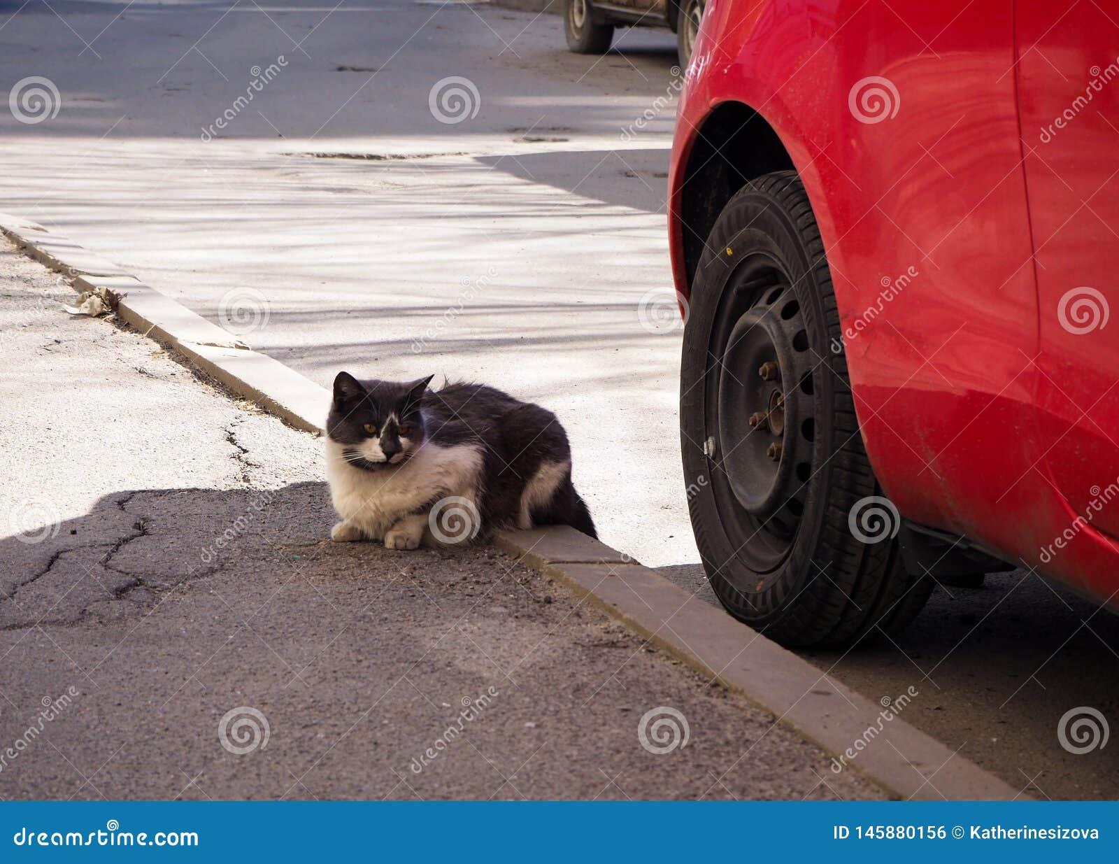Gato sin hogar de la calle en la calle
