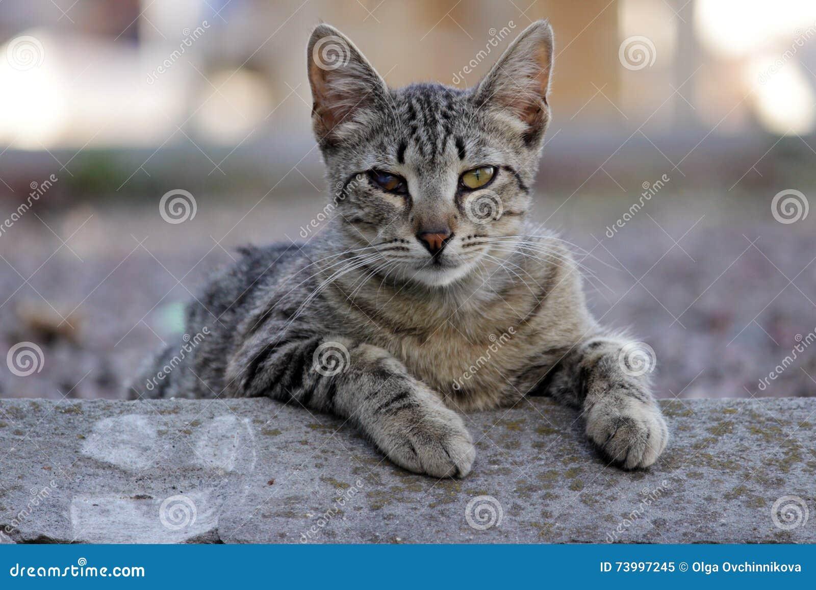 Gato sin hogar infectado con herpesvirus o chlamydiosis felino