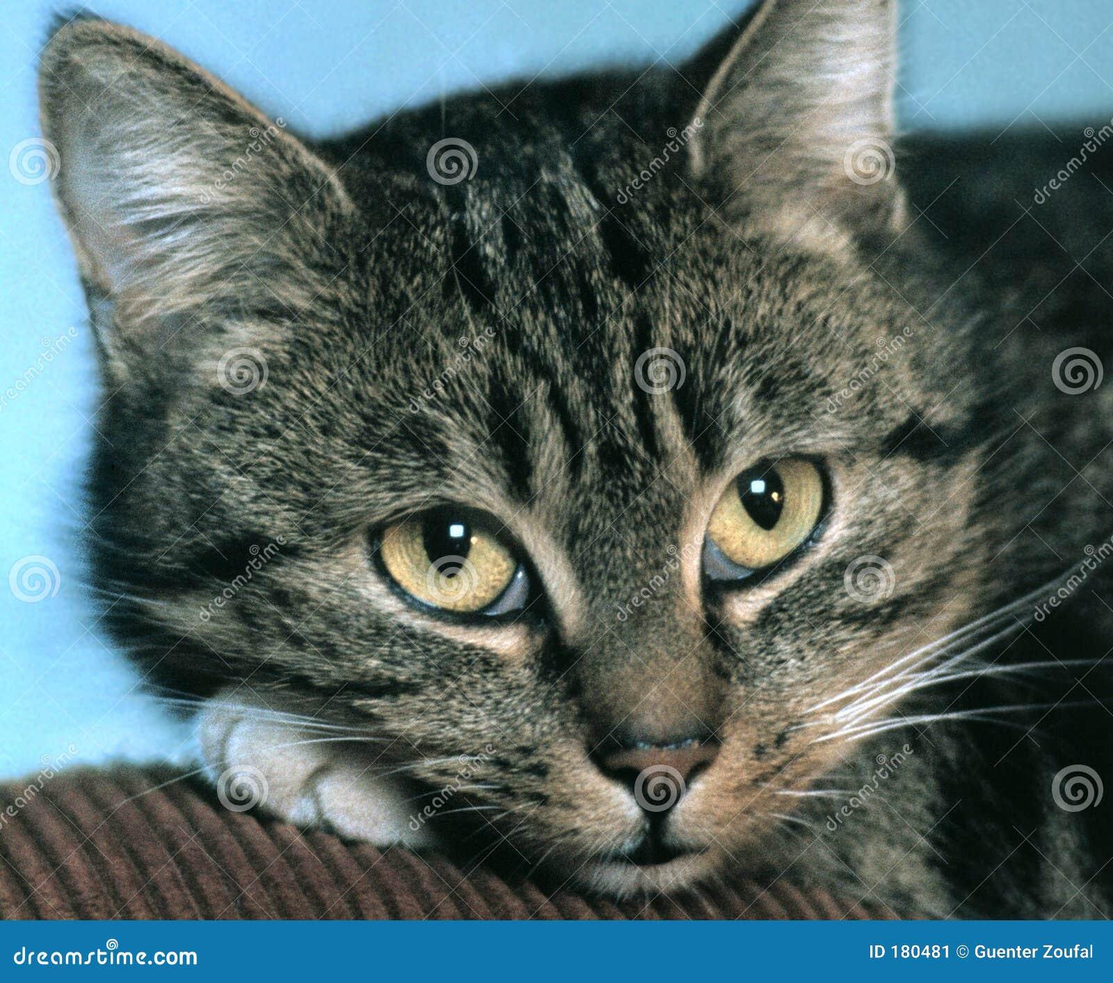 Gato soñador