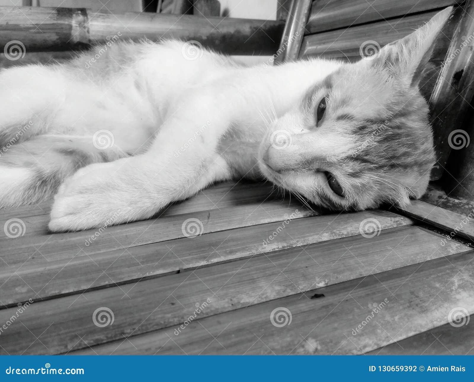 Gato soñoliento