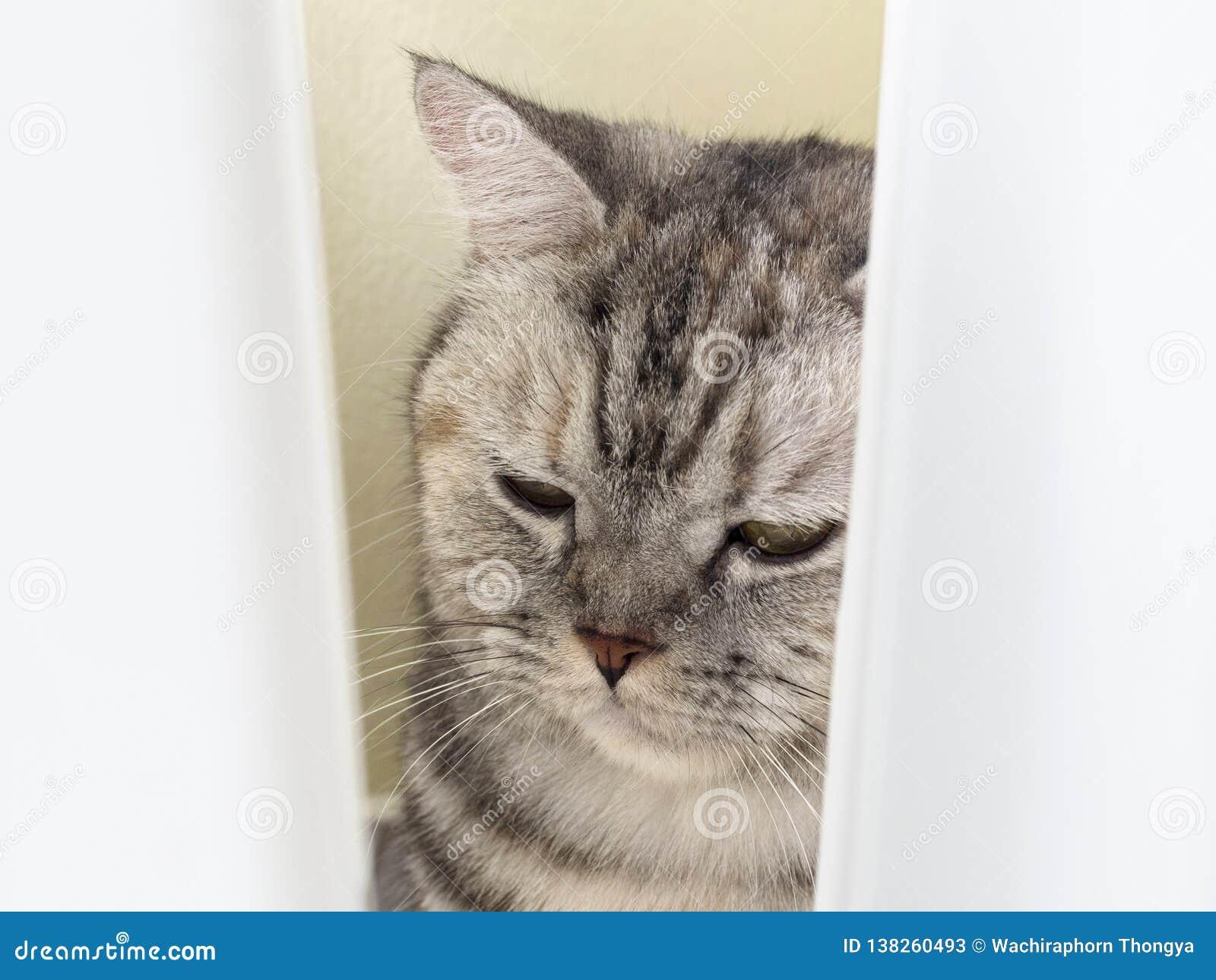 Gato soñoliento, cierre divertido lindo del gato para arriba, relajando el gato