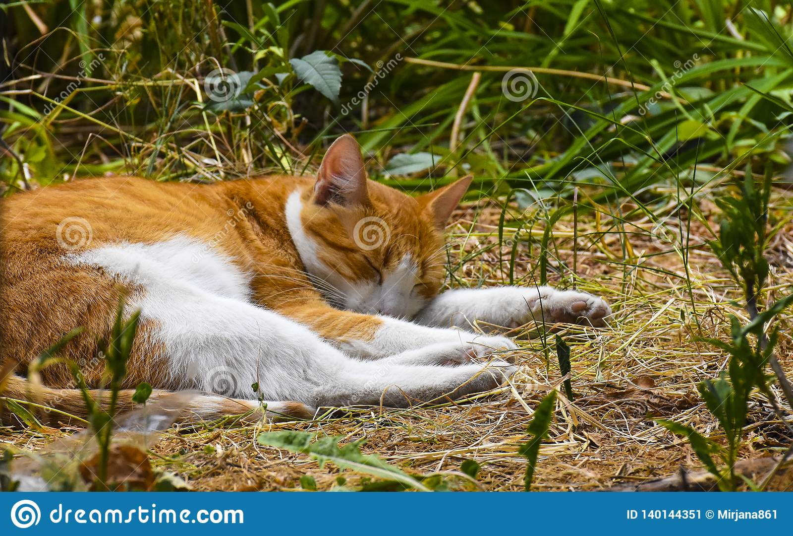 Gato soñoliento en el campo