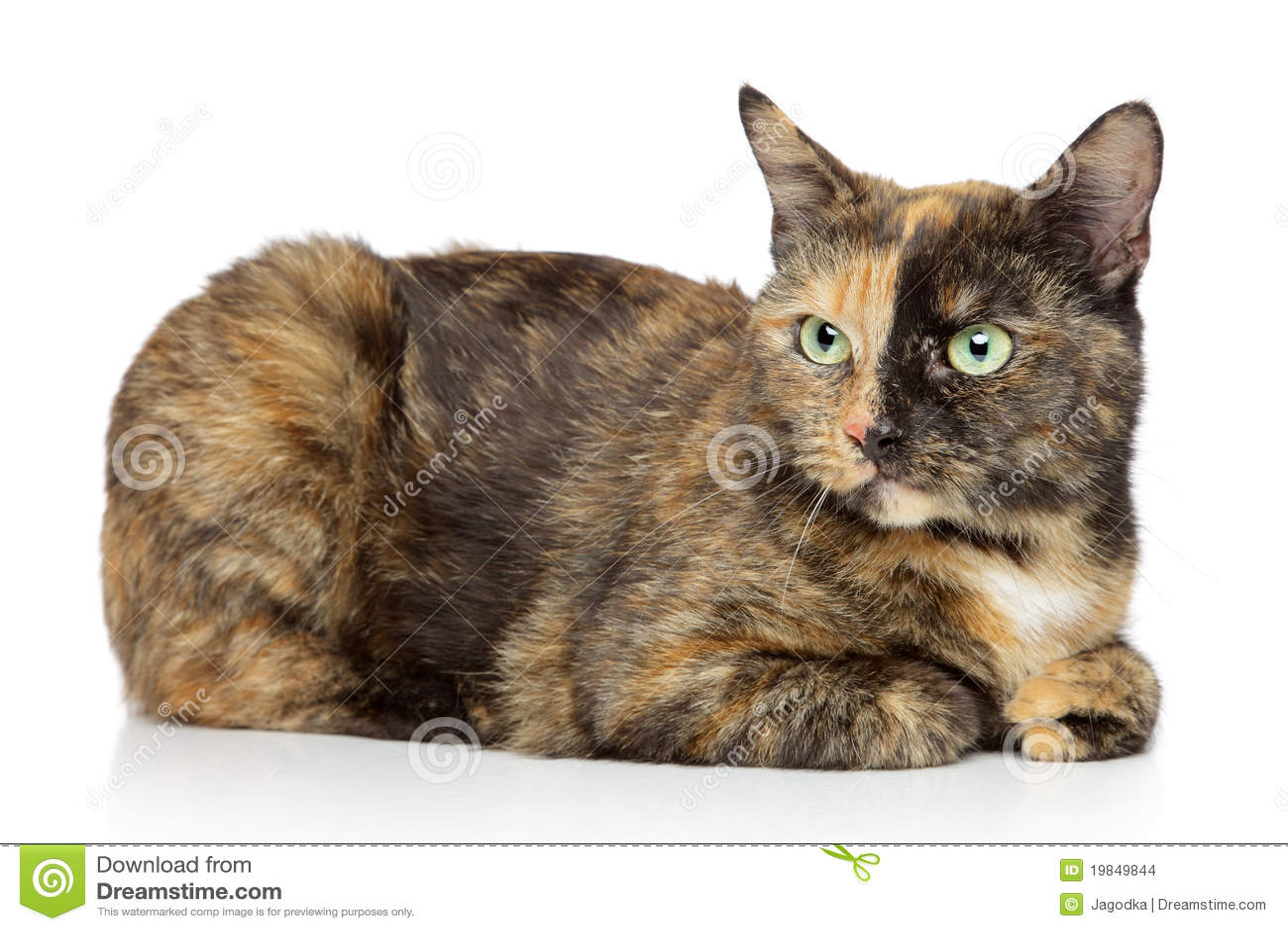 3 formas de jugar con gatos - wikiHow