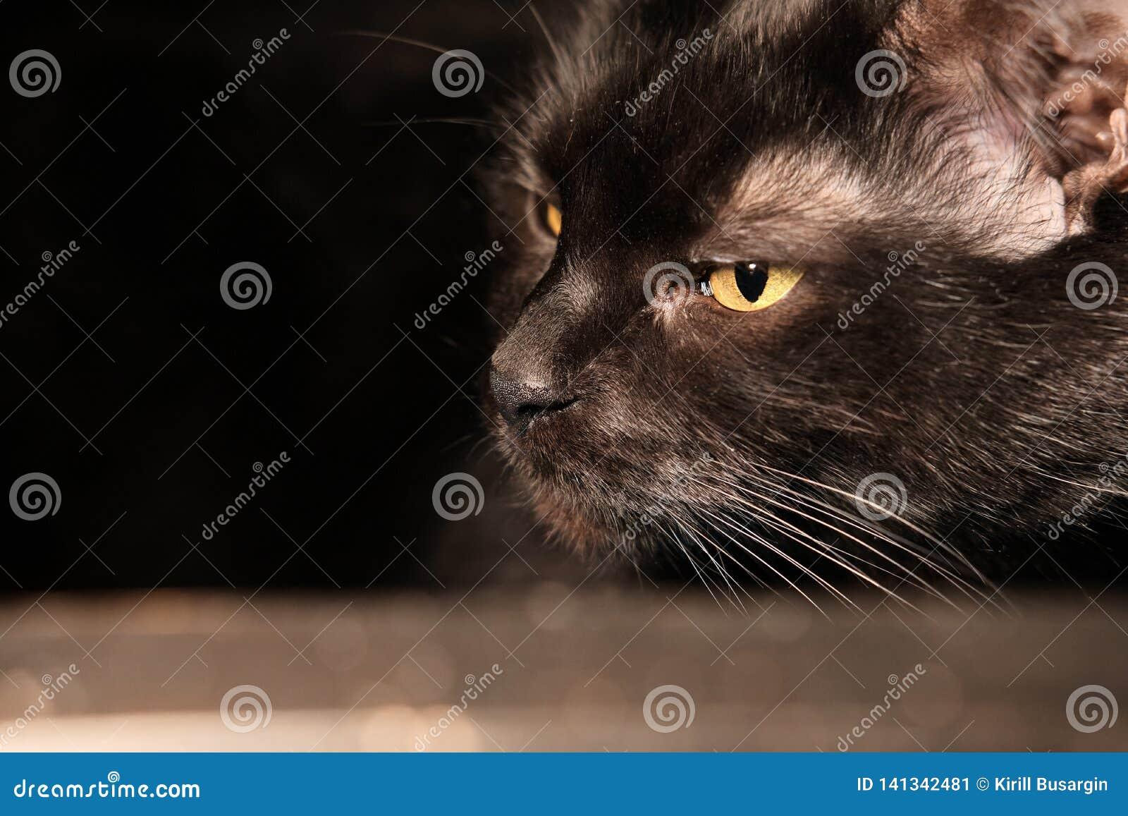 Gato triste negro que miente en una tabla de cristal Foto casera real