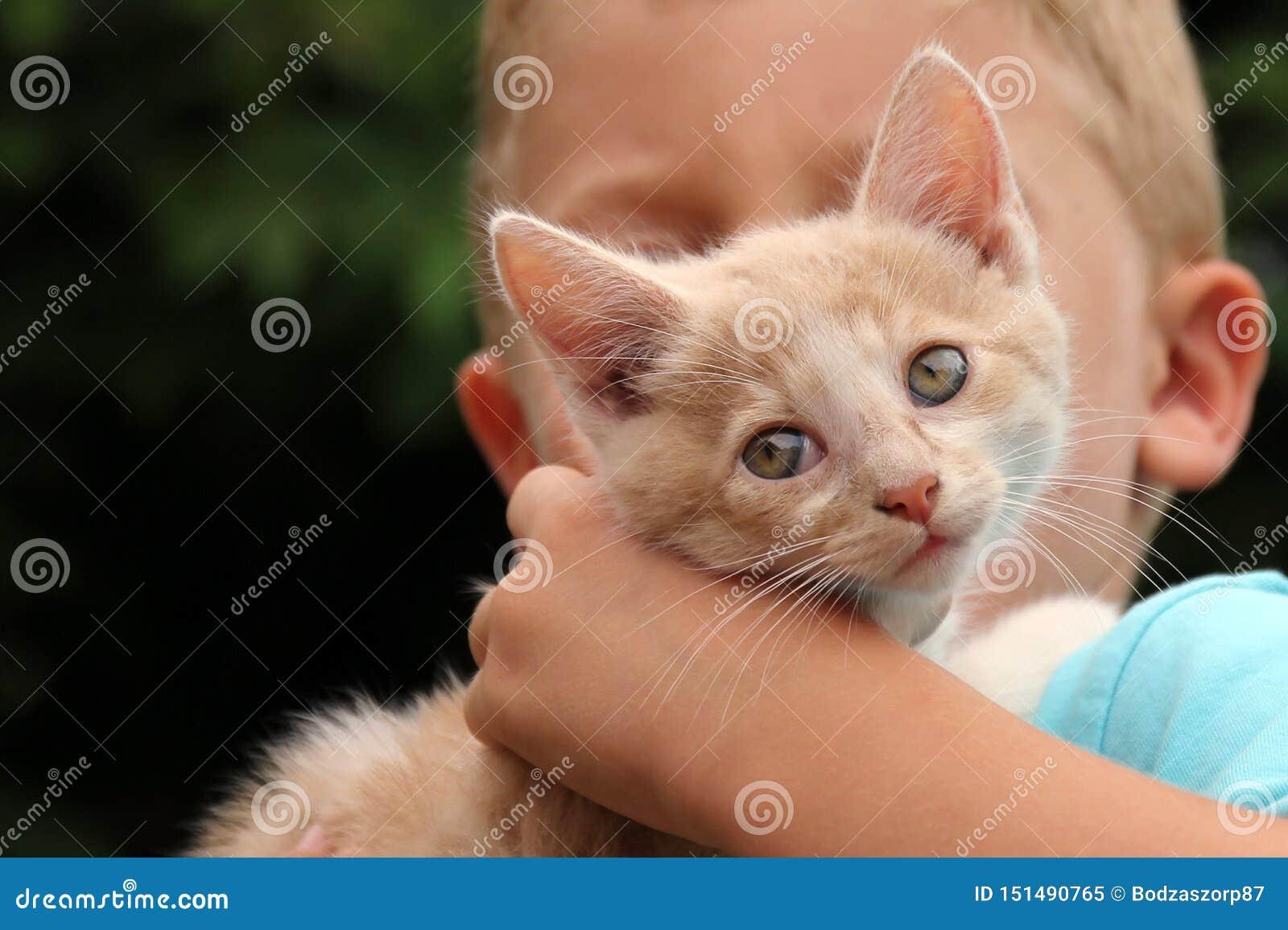 Gato vermelho bonito com criança