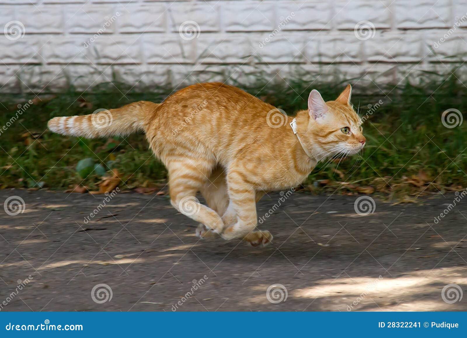 Gato vermelho no salto
