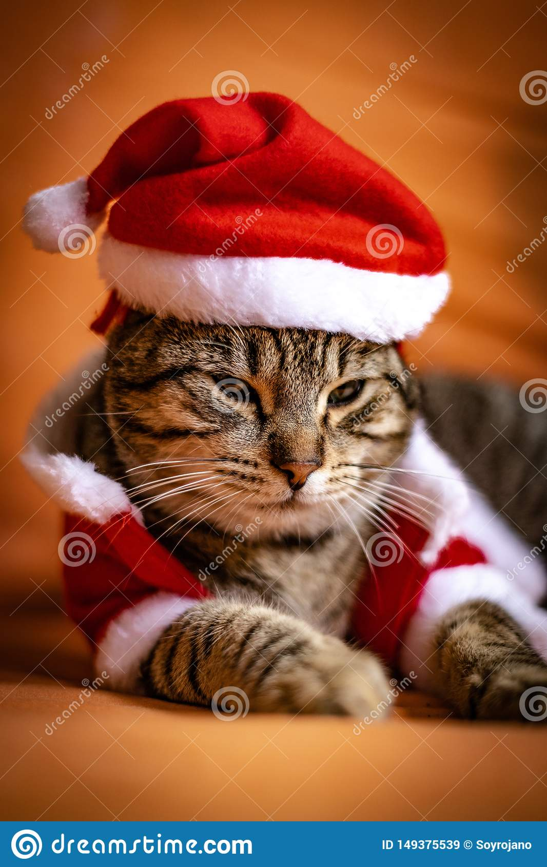Gato vestido encima como de Pap? Noel