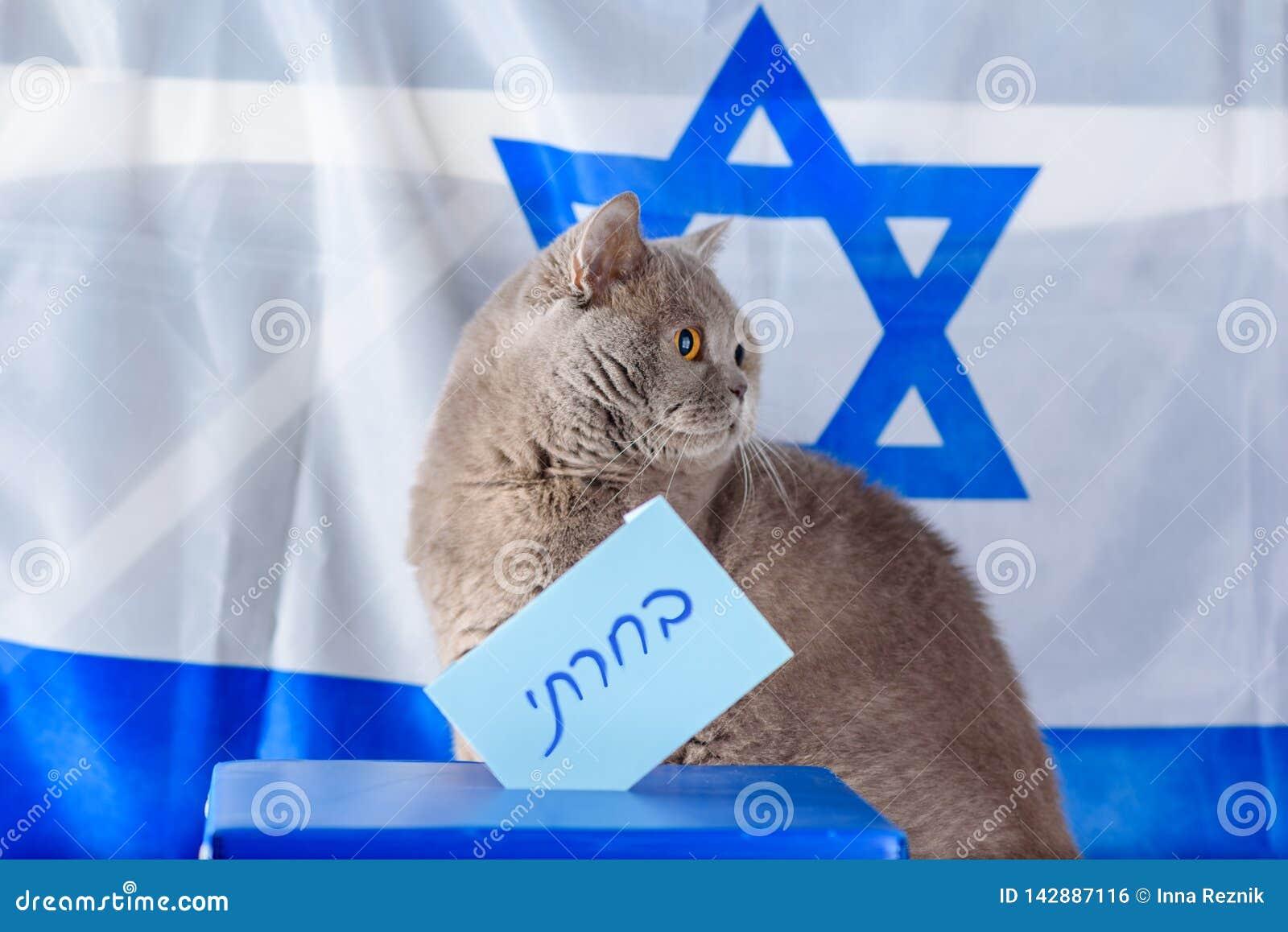 Gato y caja lindos del voto el día de elección sobre fondo de la bandera de Israel