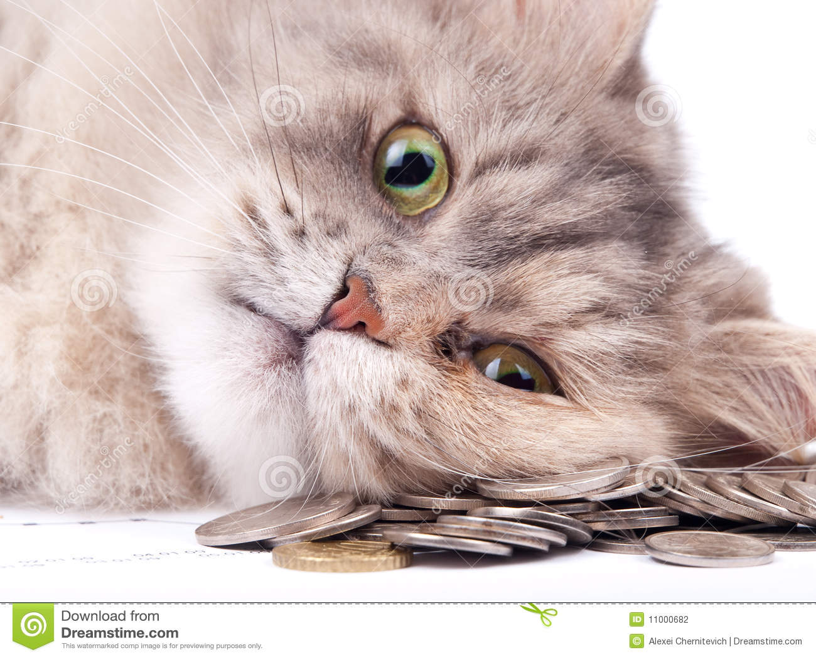 Gato y montón de monedas