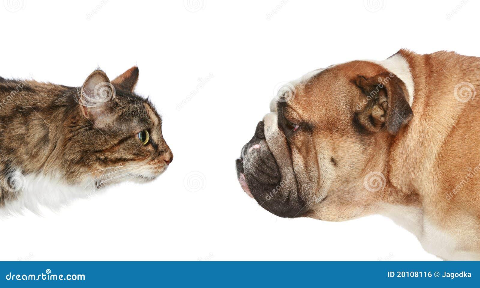 Gato y perro en un fondo blanco