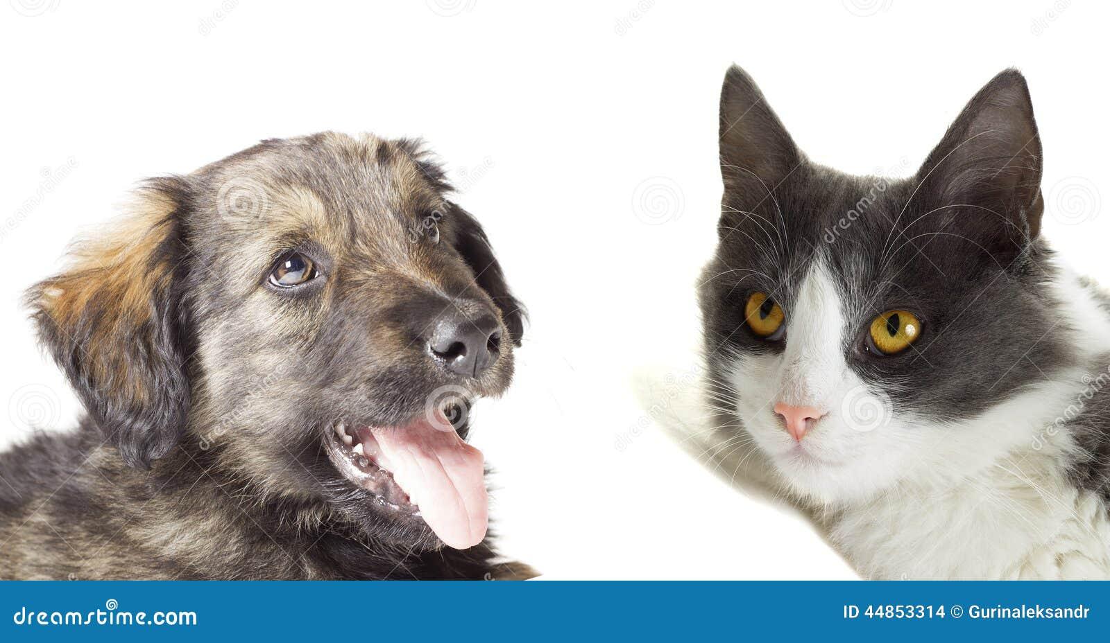 Gato y perro que miran para arriba