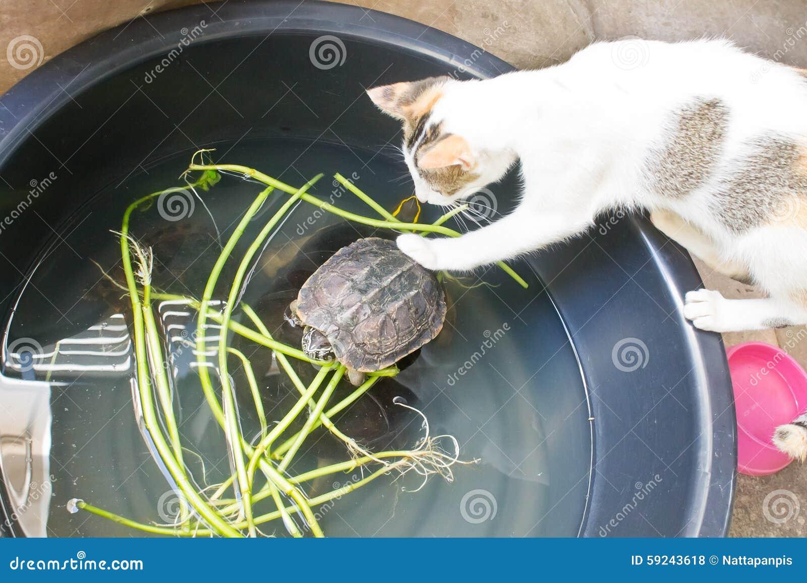 Download Gato y tortuga foto de archivo. Imagen de curiosidad - 59243618