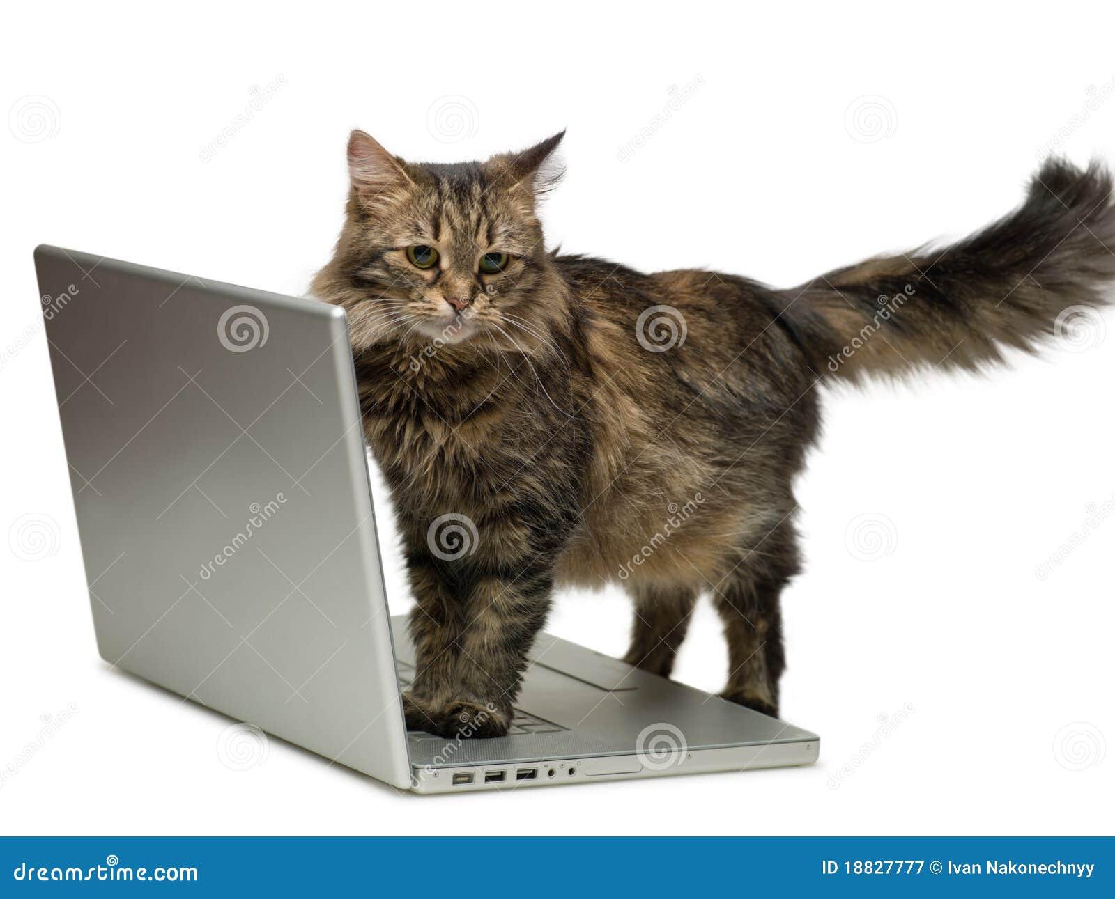 Gato y un ordenador