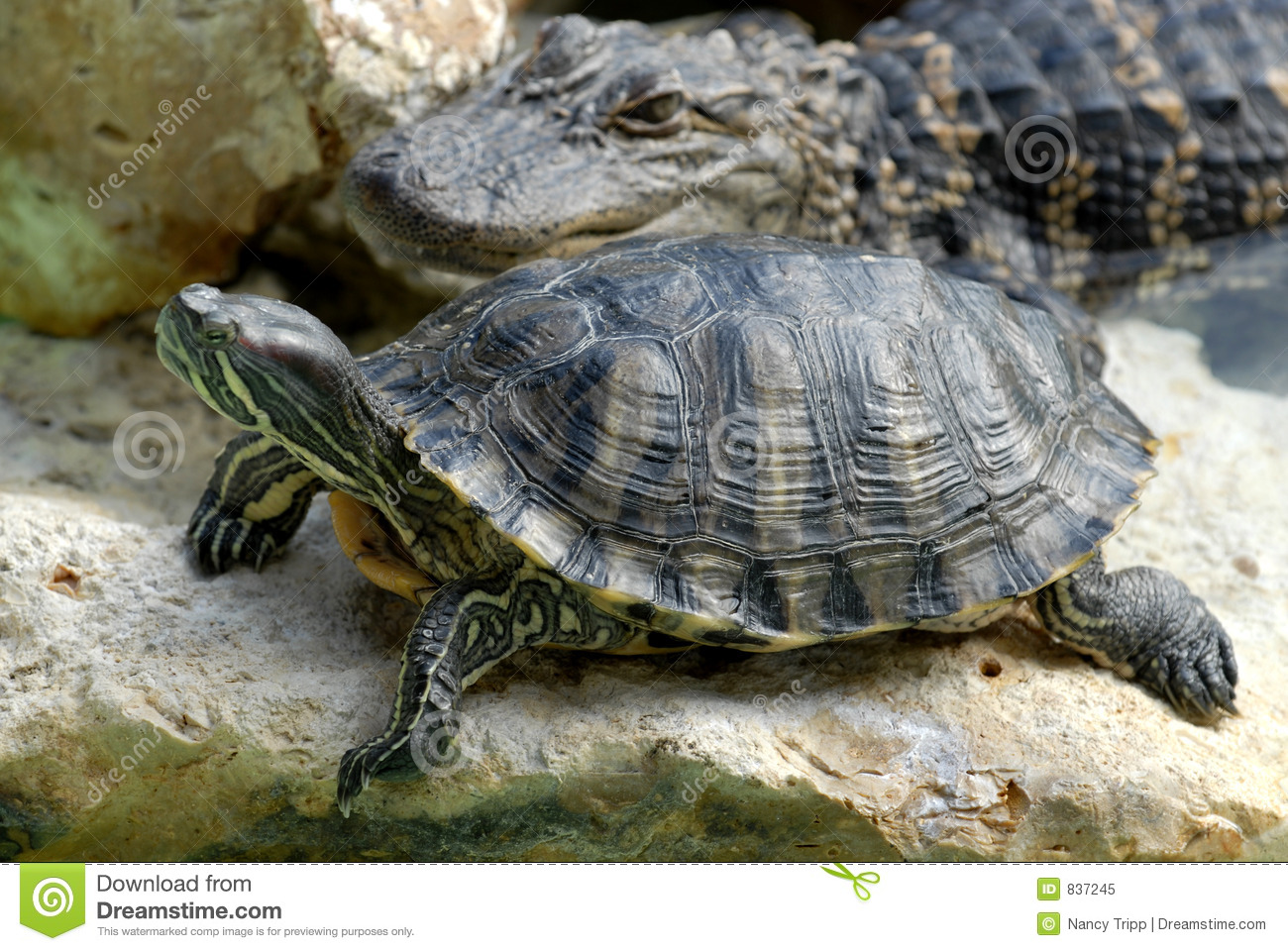 Gator and Turtle