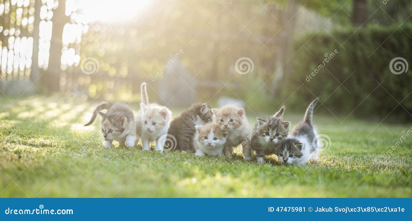 Gatos afuera