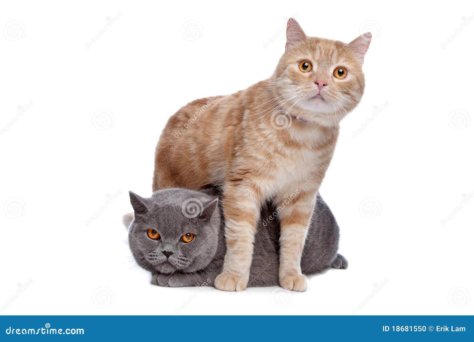 Gatos amigáveis bonitos