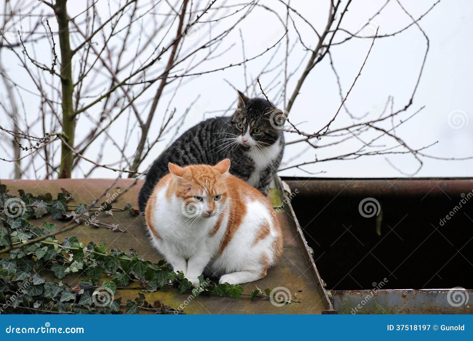 Gatos asustados