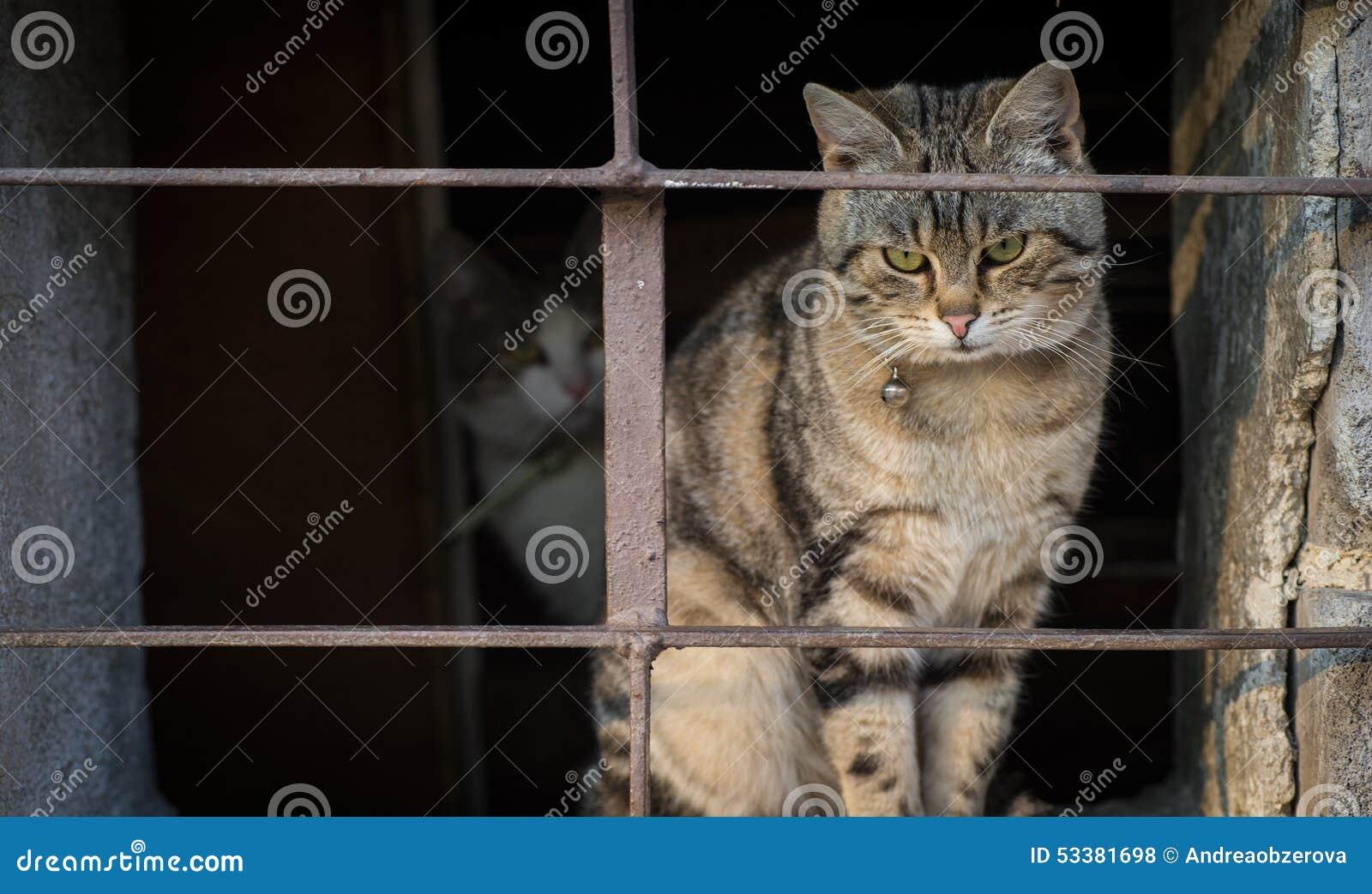 Gatos asustados detrás de barras