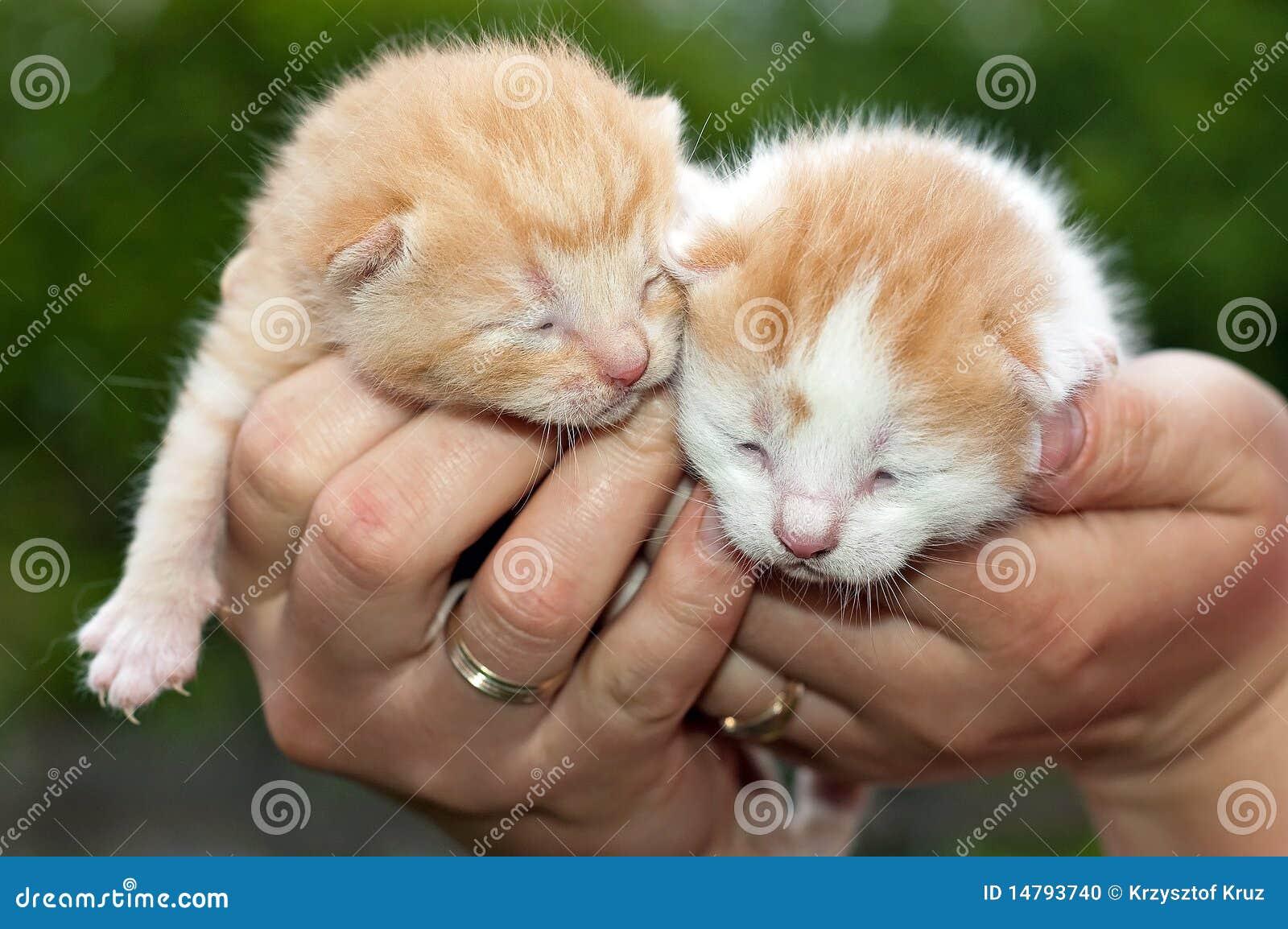 gatos bonitos related keywords - photo #29