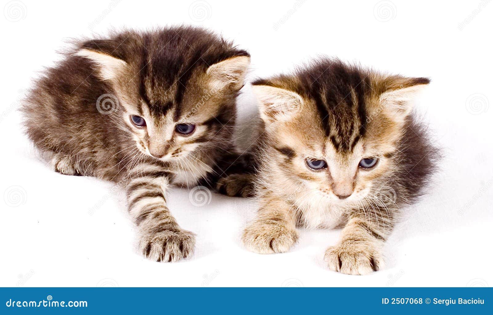 gatos bonitos related keywords - photo #6