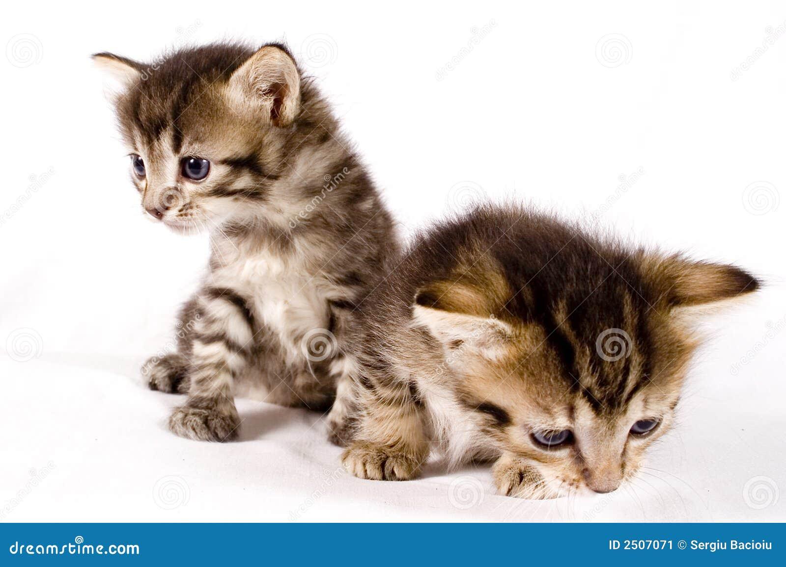 gatos bonitos related keywords - photo #4