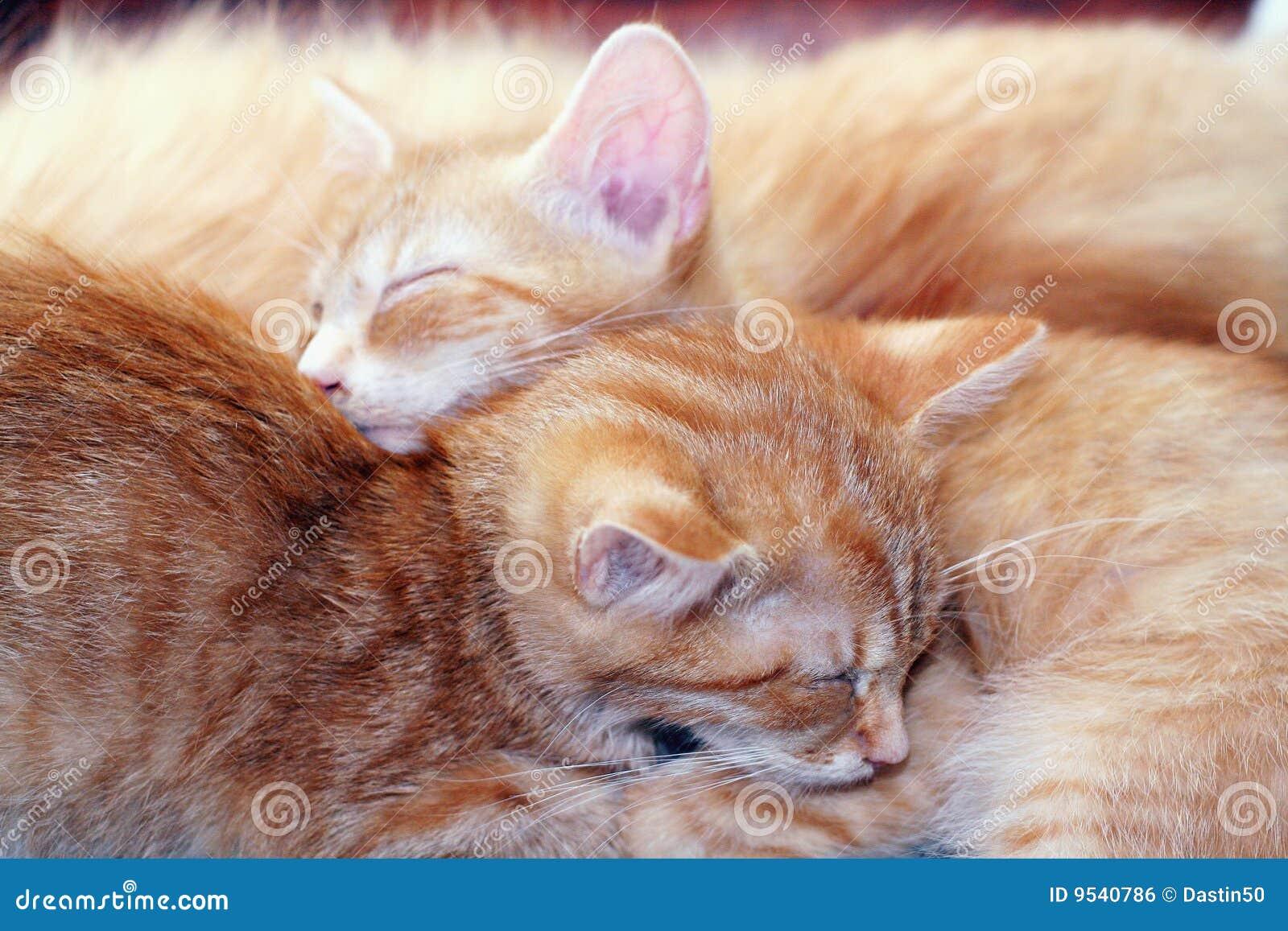 gatos bonitos related keywords - photo #3