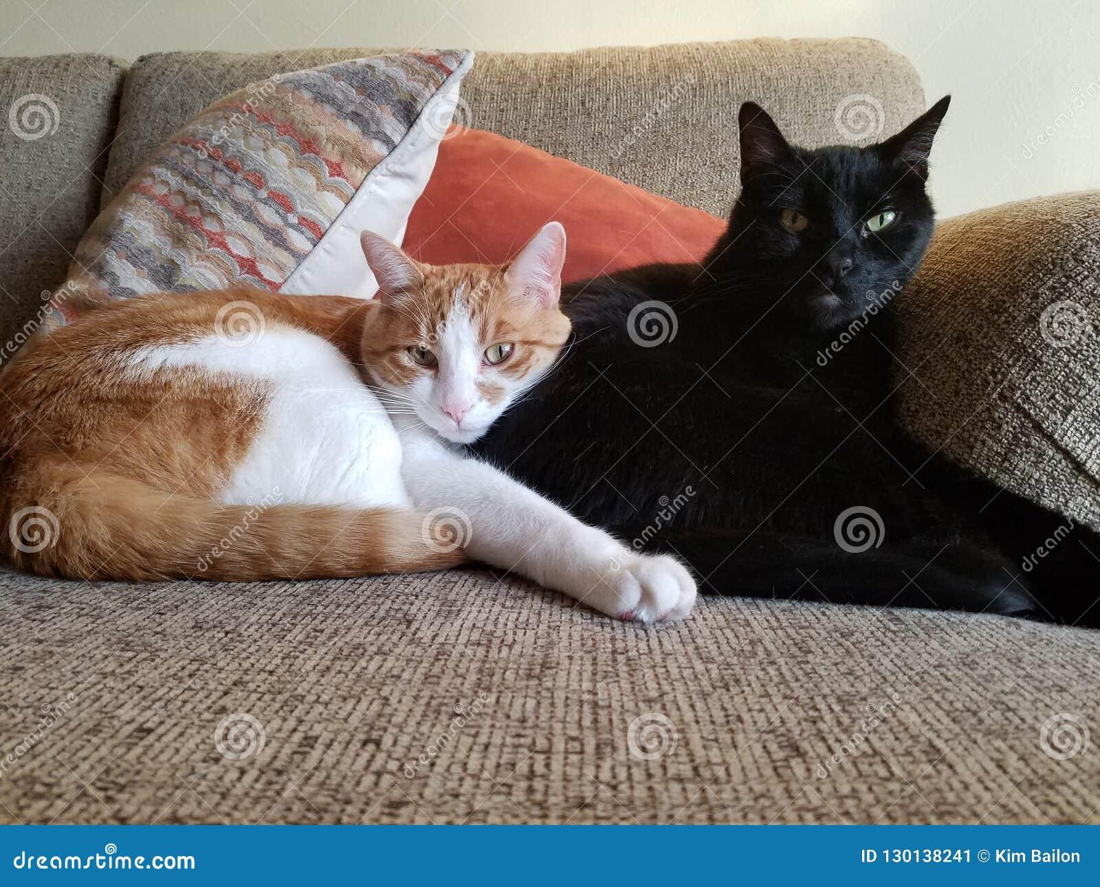 Gatos de abrazo en el sofá