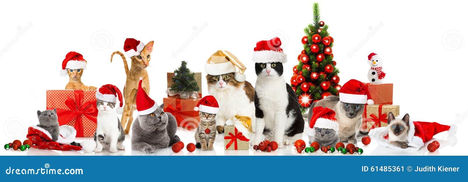 Gatos de la Navidad