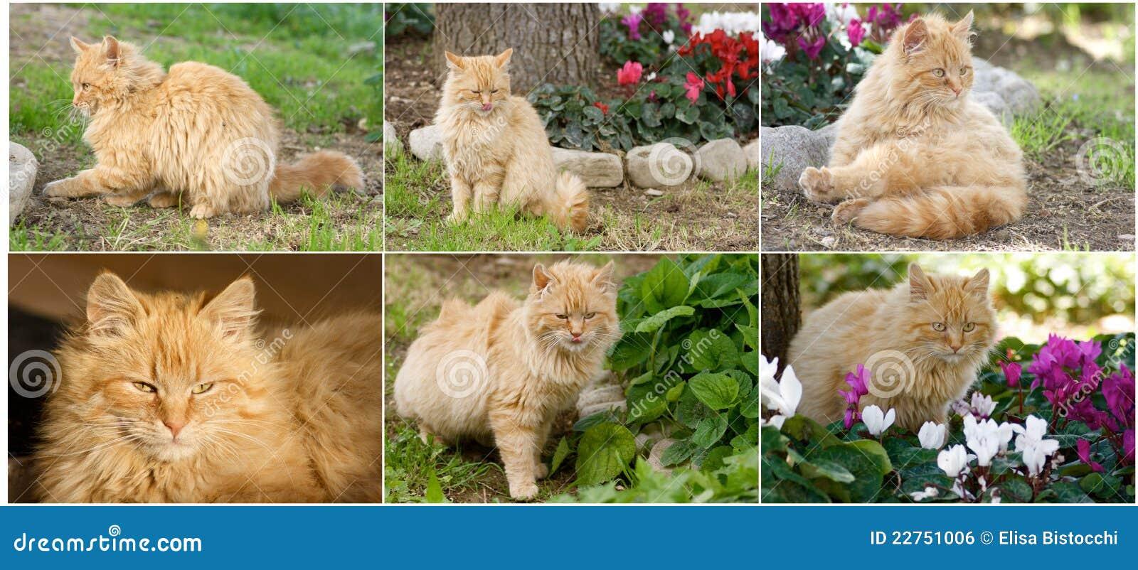Collage De Gatos - Marco De La Foto Imagen de archivo - Imagen de ...