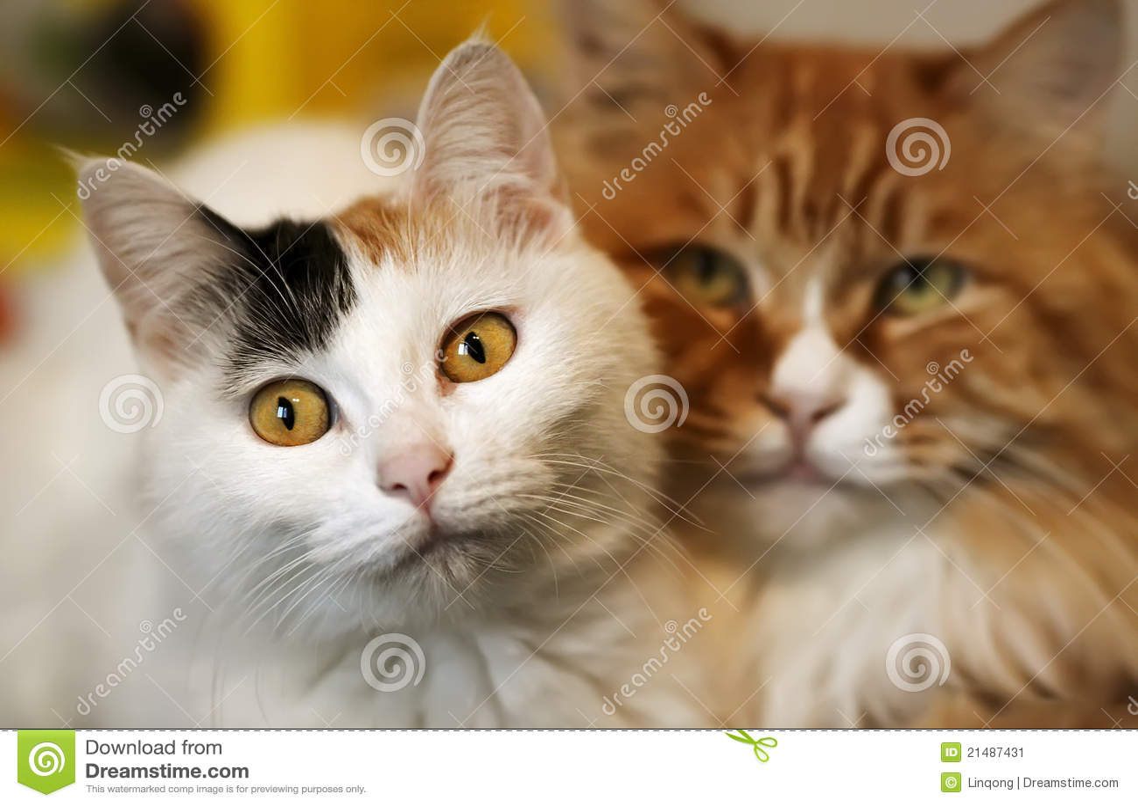 Gatos do amor