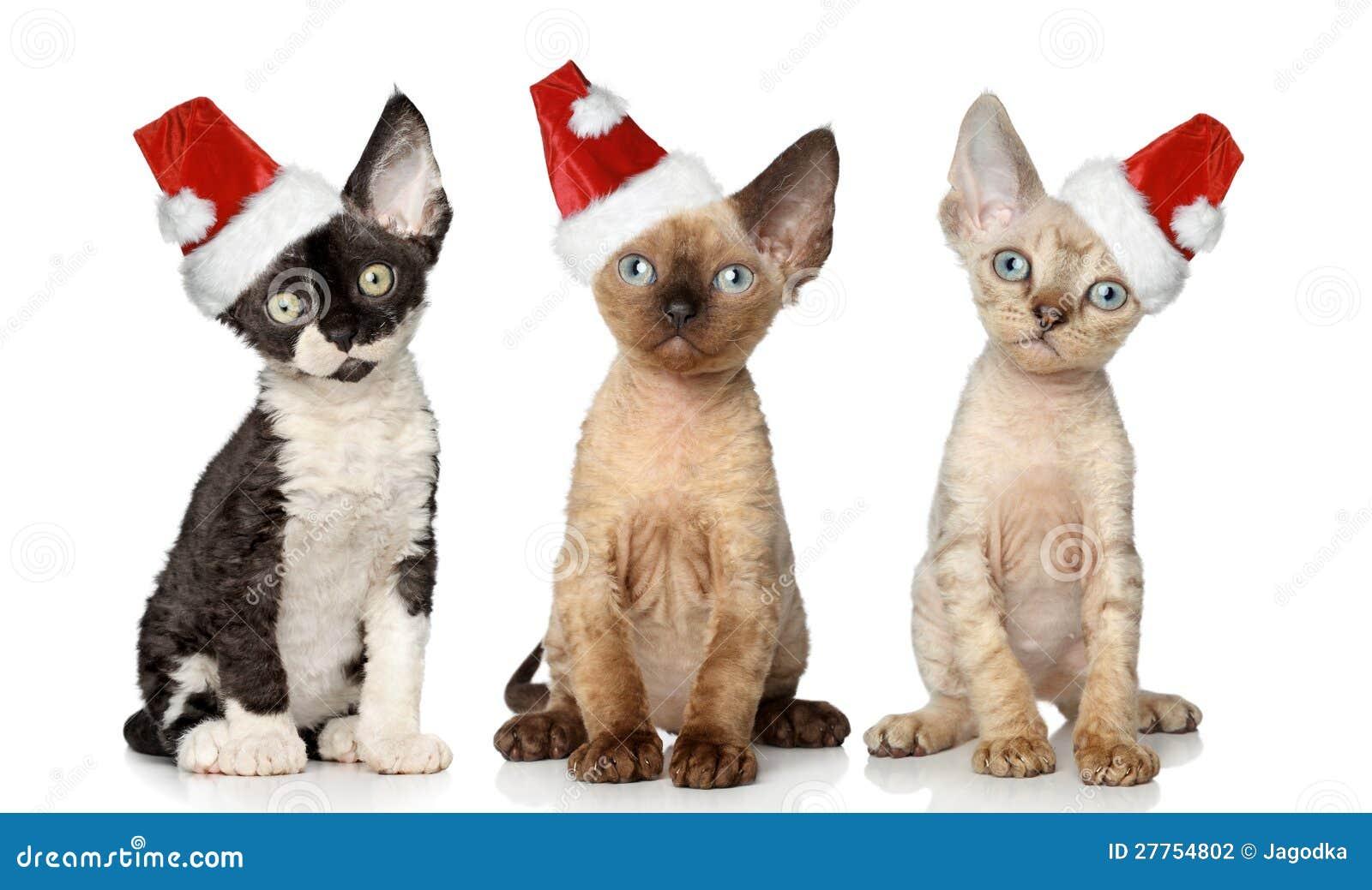 Gatos no chapéu do vermelho do Natal