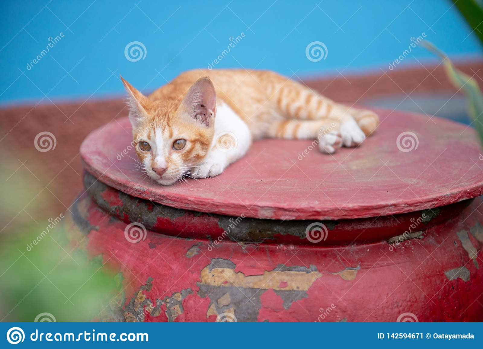 Gatos no frasco