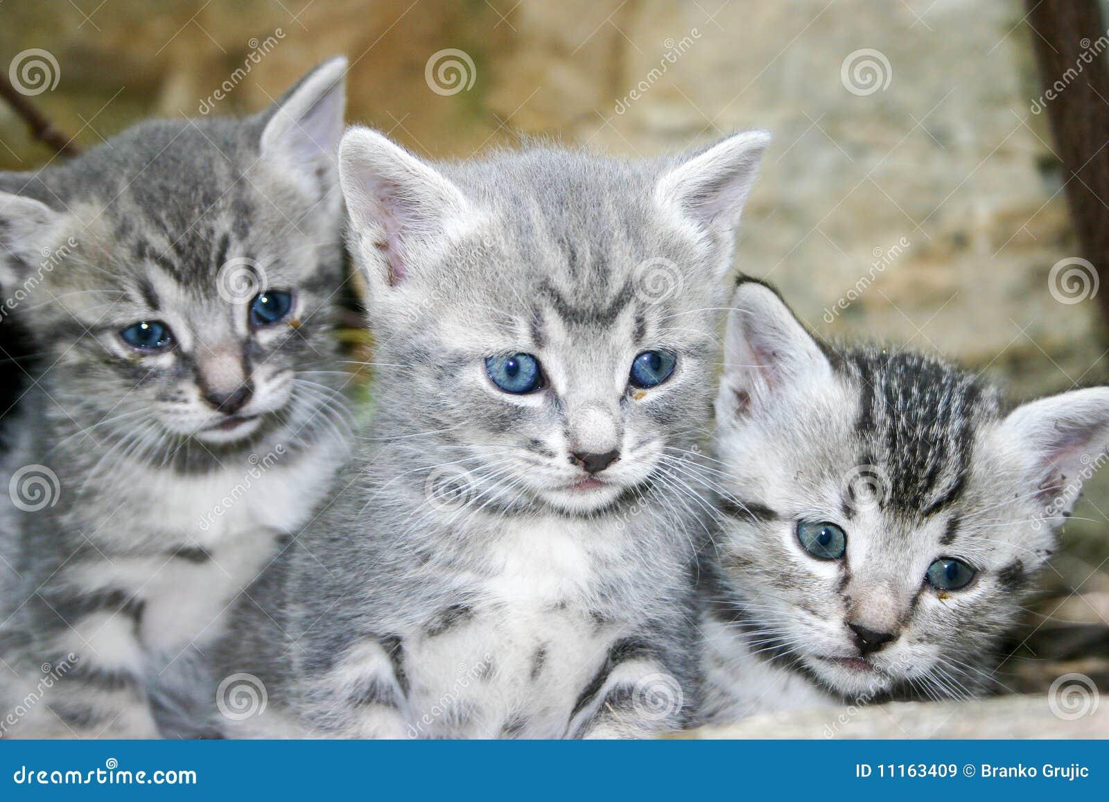 gatos bonitos related keywords - photo #11