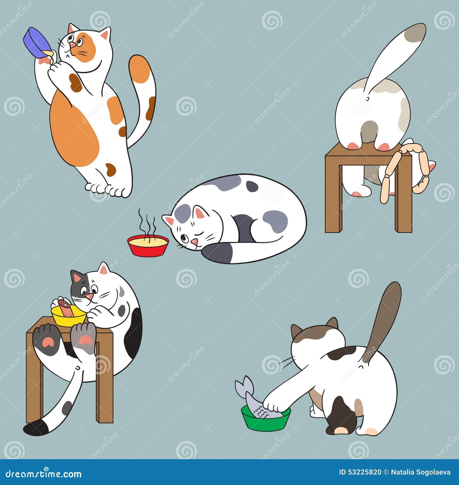 Gatos y colección de la comida