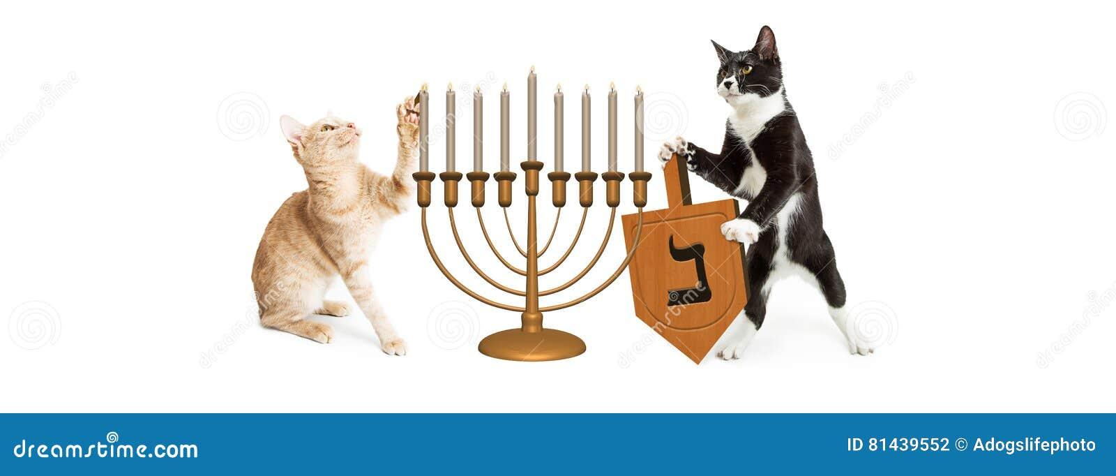 Gatti che celebrano Chanukah