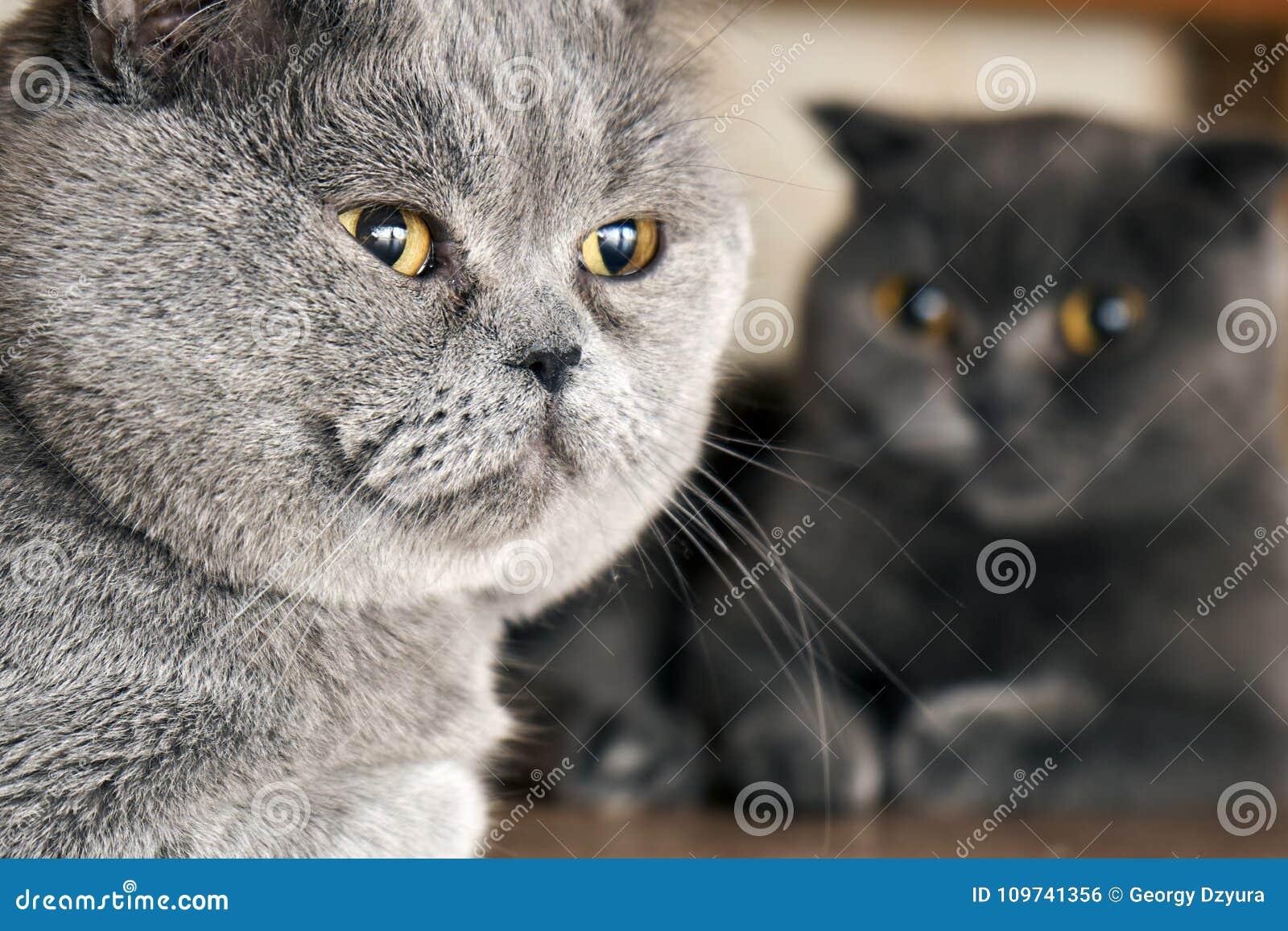 Gatti Che Si Siedono Sotto Un Letto Nel Periodo Accoppiamento