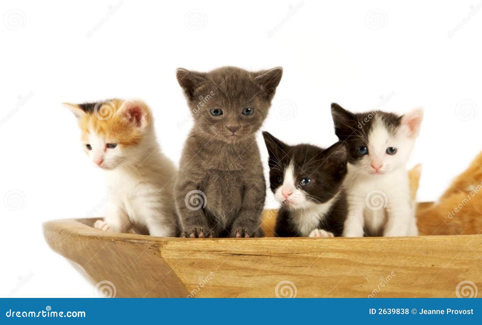 Gatti curiosi fotografie stock libere da diritti for I gattini piccoli