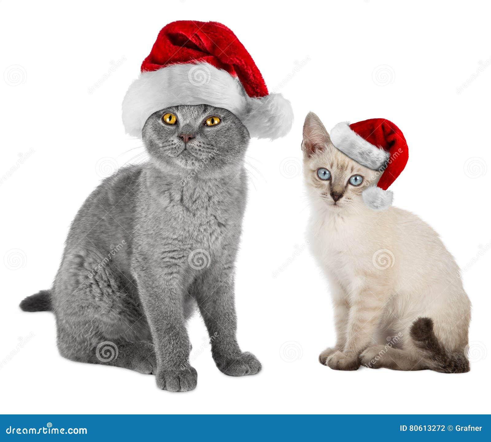 Gatti Di Natale Con I Cappelli Di Santa Fotografia Stock Immagine