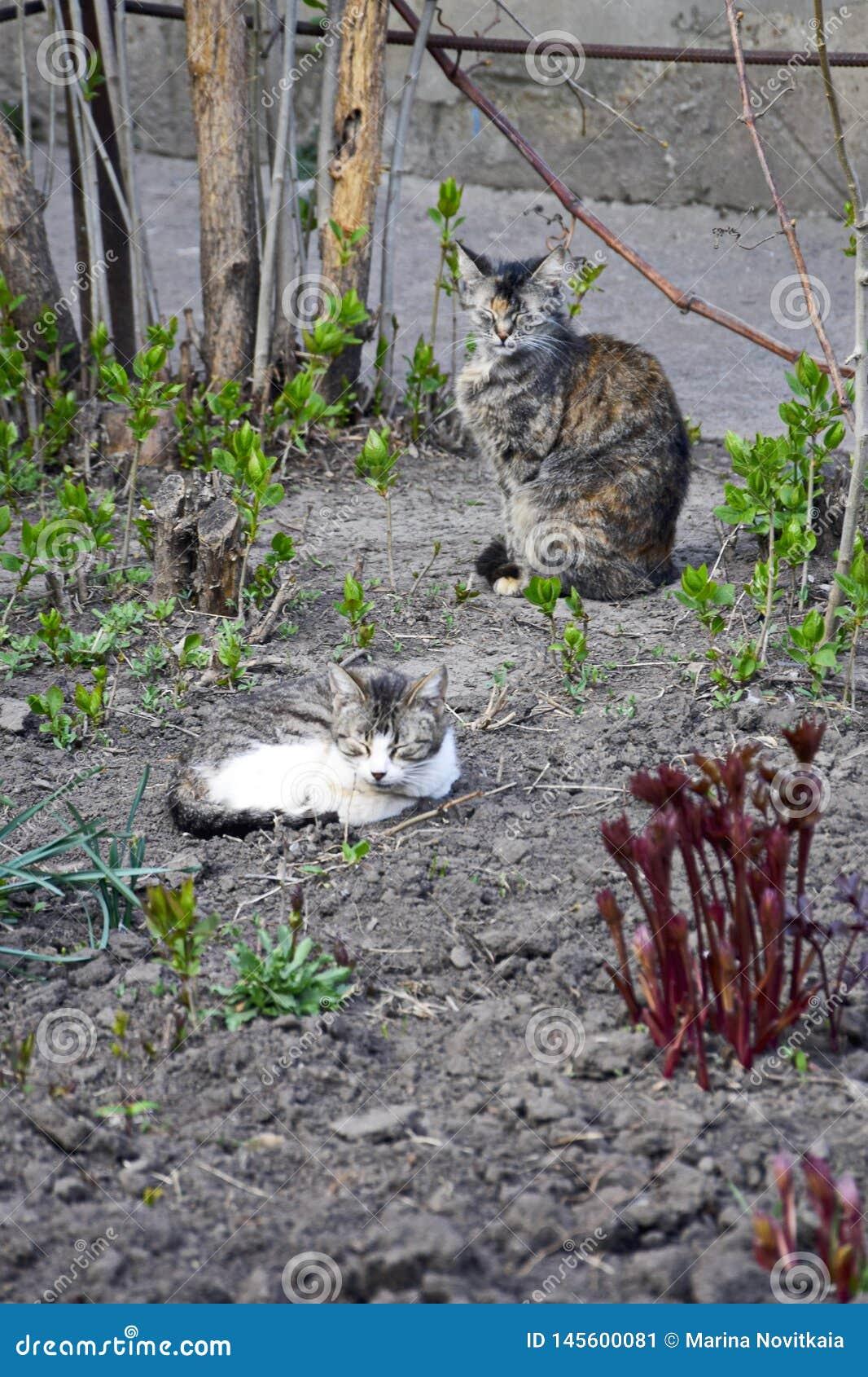 Gatti di sonno Giovane gatto grigio accartocciato sulla terra