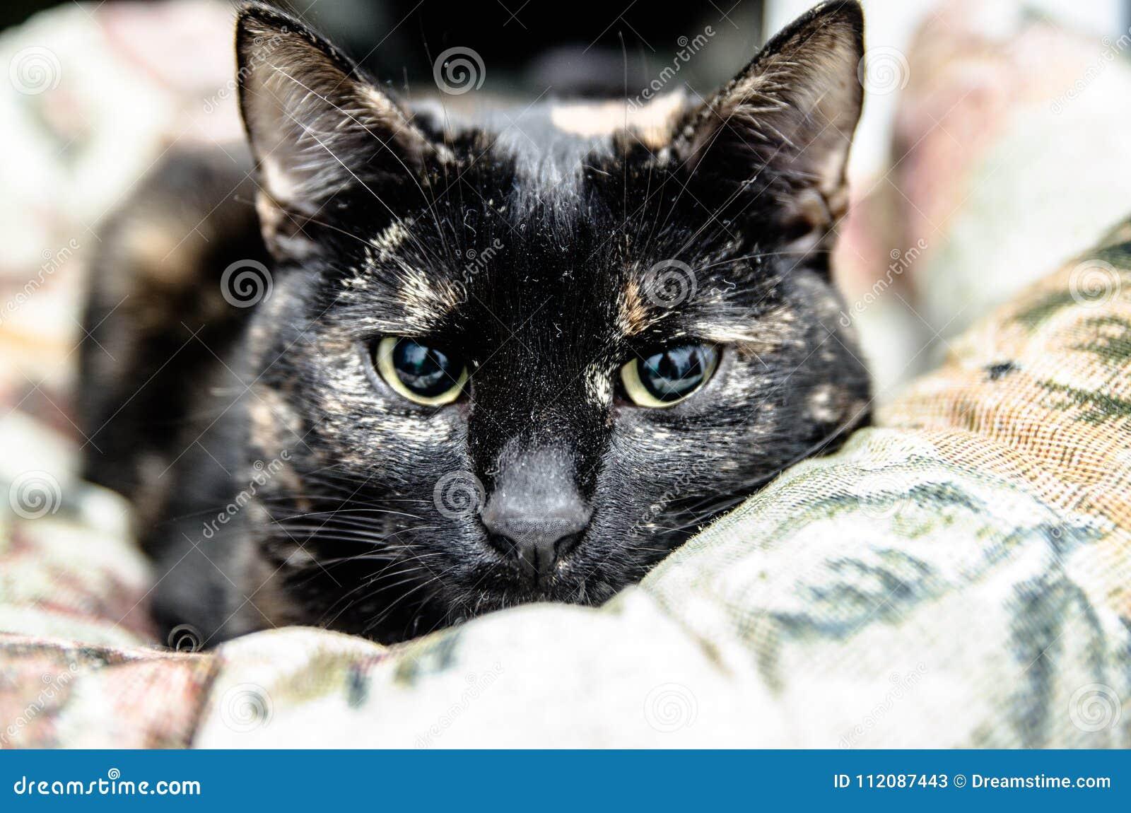 Gatti Gli animali domestici sono animali che sono stati addomesticati dagli esseri umani
