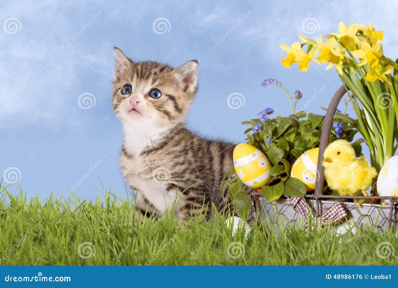 Gatti pasqua con i narcisi su erba fotografia stock for Erba per gatti