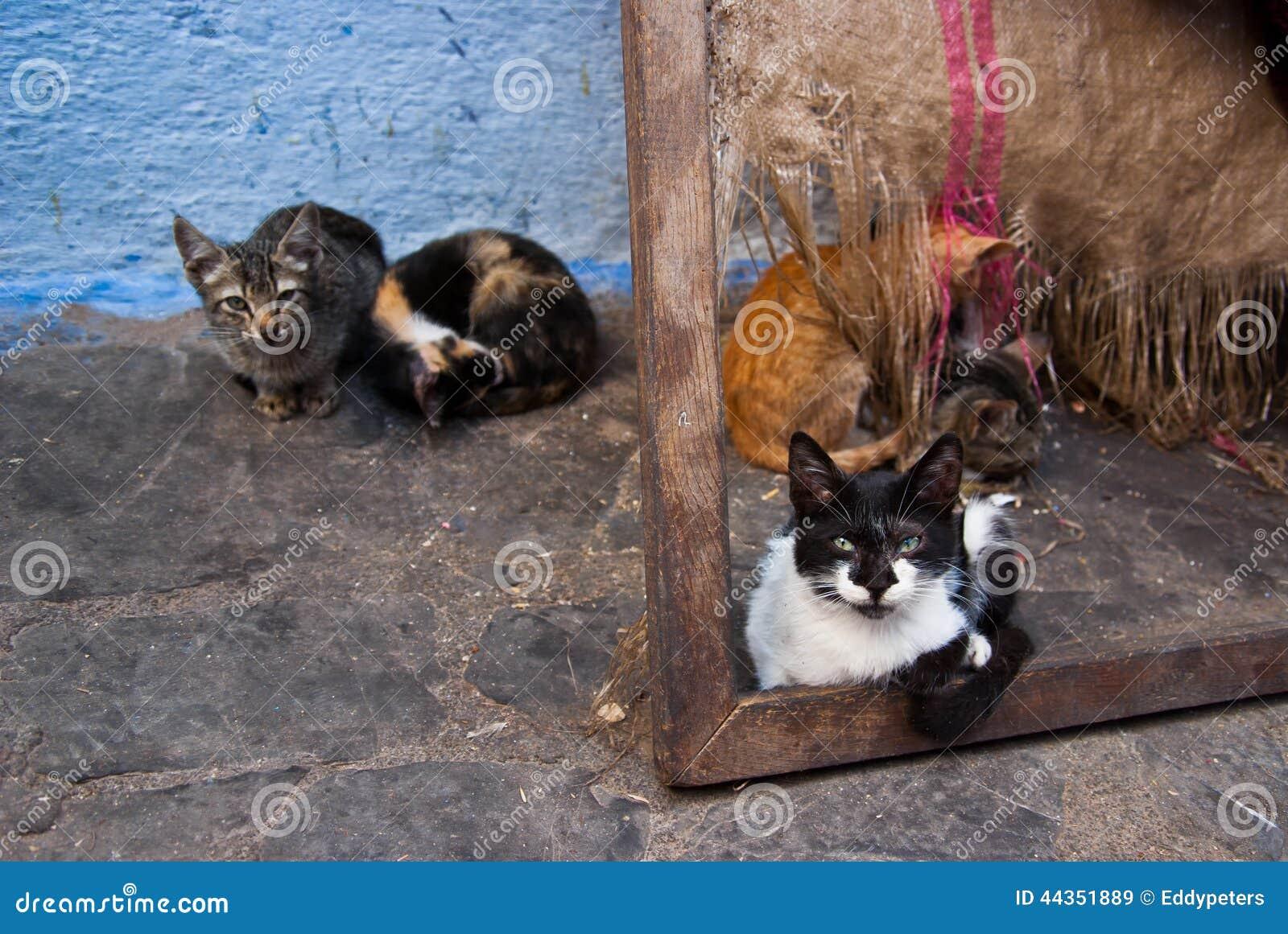 Gatti smarriti in Chefchaouen, Marocco