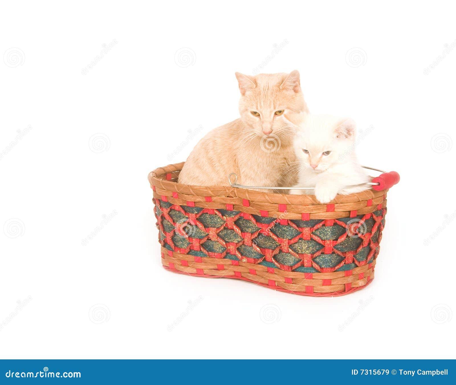 Gatti in un cestino