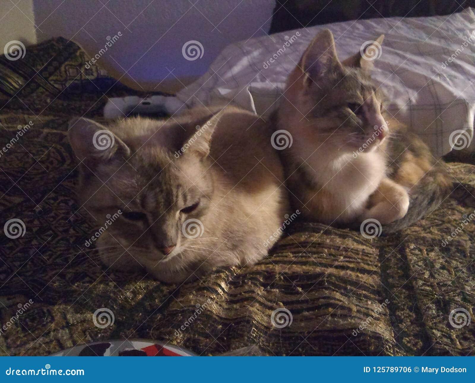 Gattini Dolci Fotografia Stock Immagine Di Snuggling 125789706