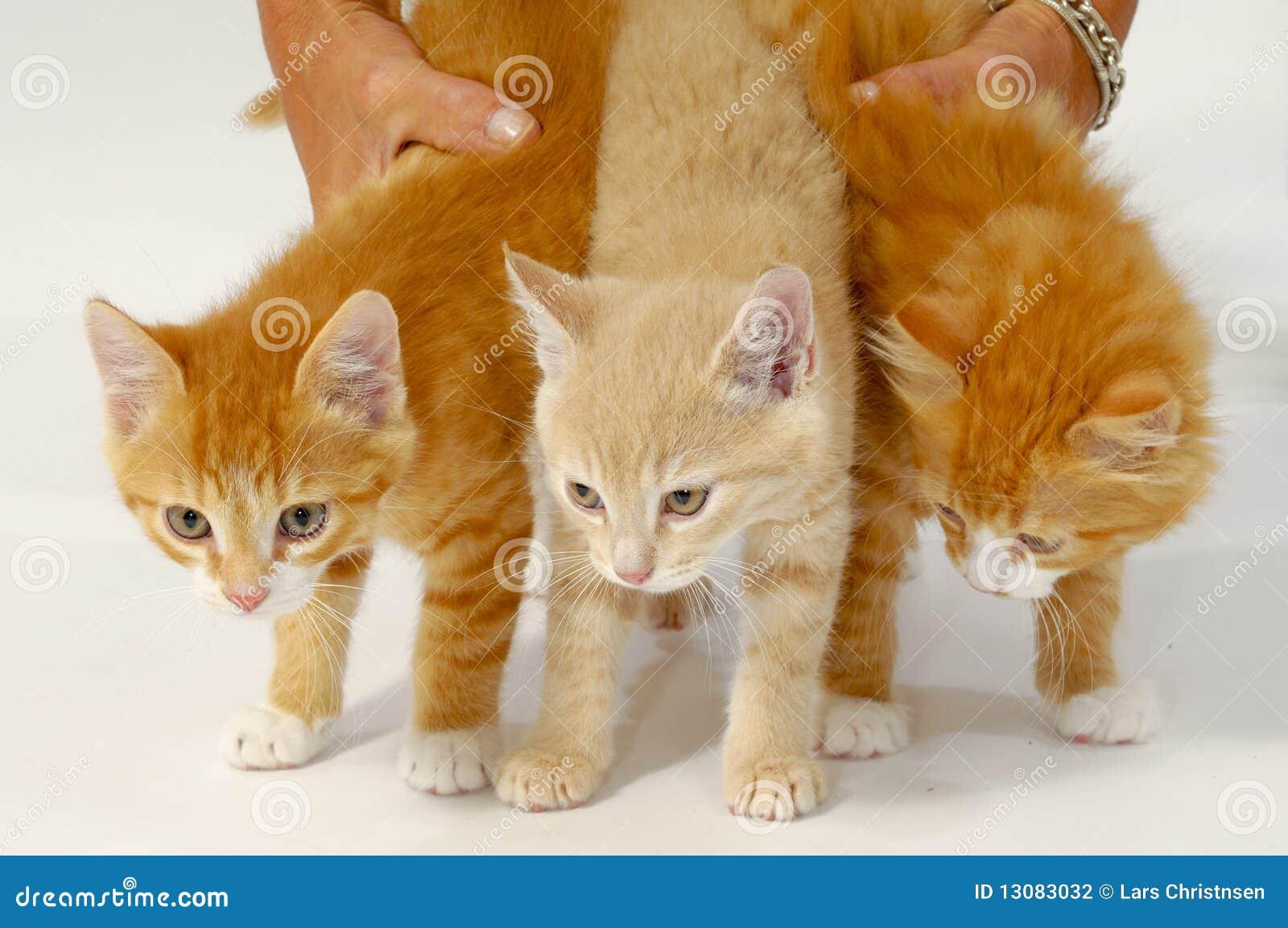 Gattini Dolci Del Gatto Fotografia Stock Immagine Di Abbastanza