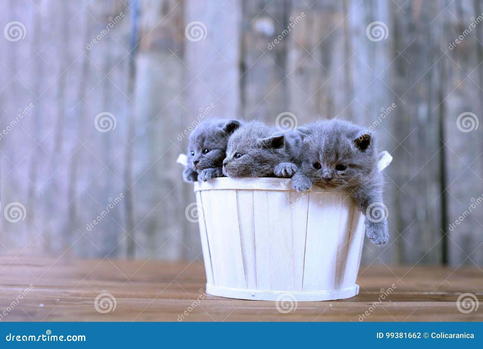 Gattini in un cestino